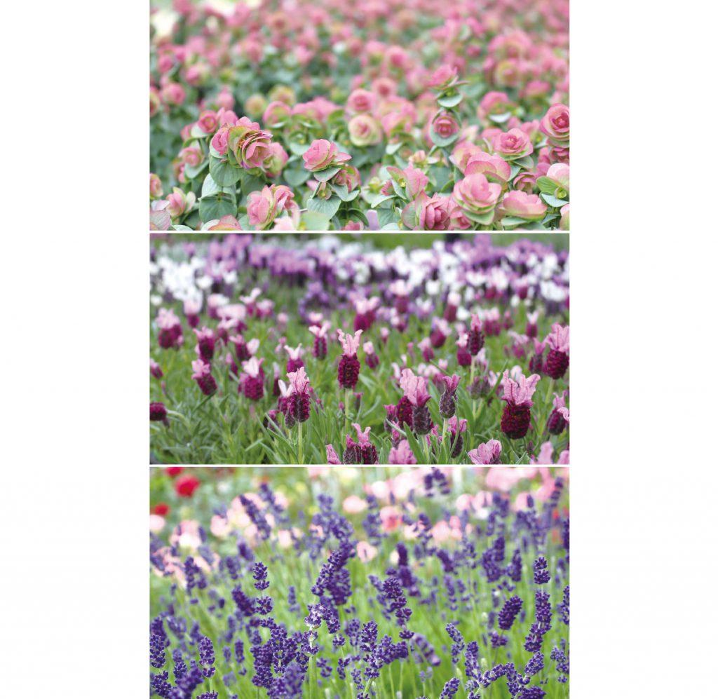 毎日の成長が楽しみになる ハーブ栽培&家庭菜園