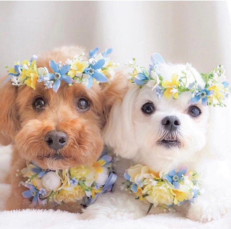 憧れの結婚式場で愛犬家交流ができる! 「マルシェ・de・ドッグ」7/23(金・祝)開催!